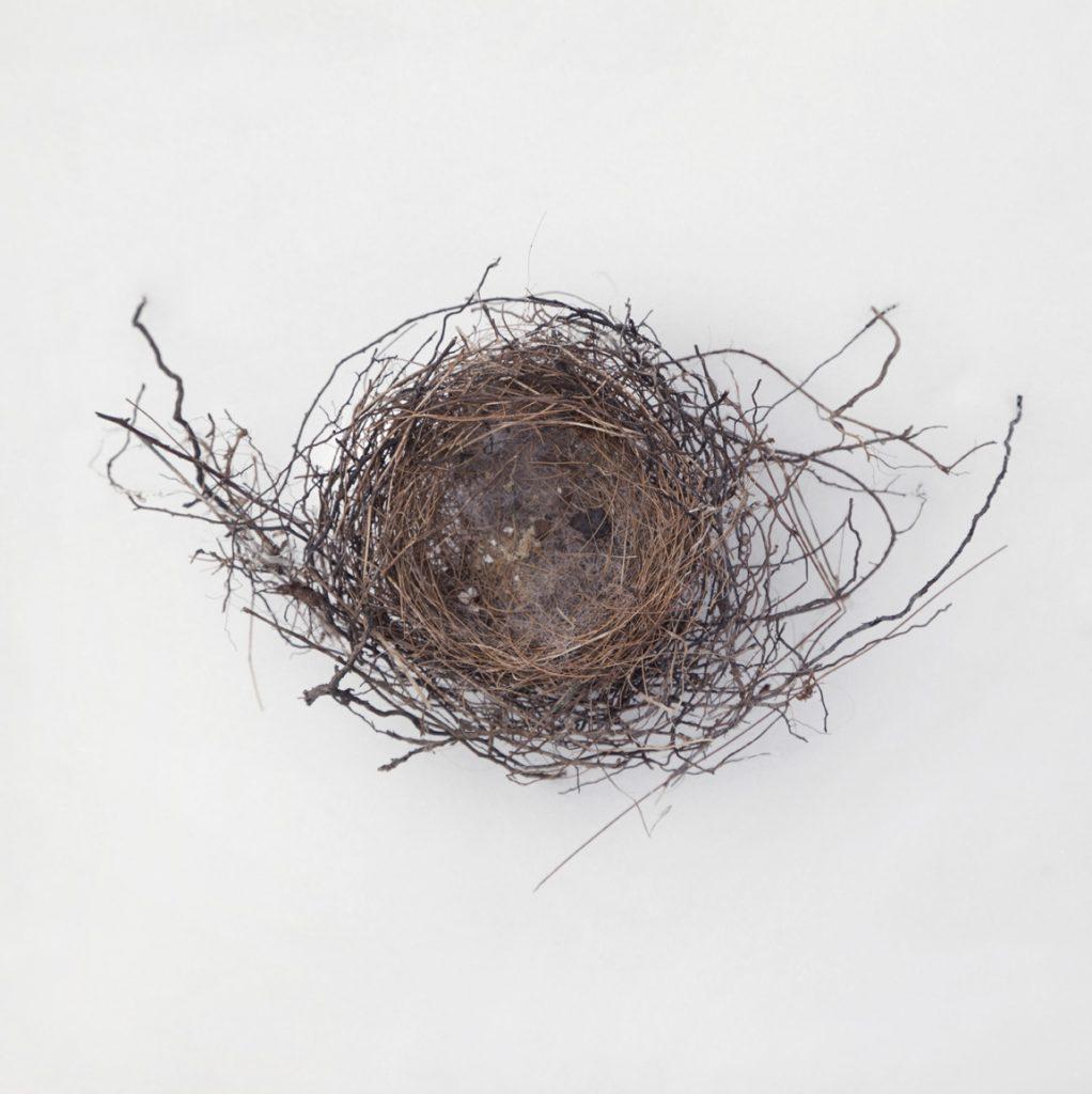 Nest-1750 copy